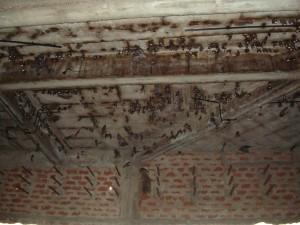 """The """"Bat Cave"""""""